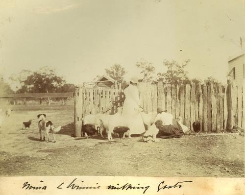 Mina and Winnie milking goats, undated. Image from the State Library of Queensland