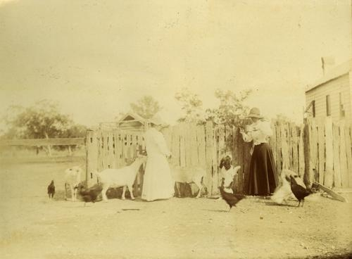 Wilhelmina and Winifred Rawson with the goats at The Hollow c.1880 Courtesy of the State Library of Queensland