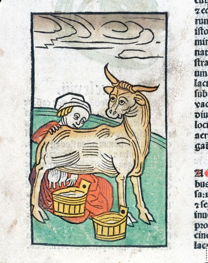 A_woman_milking_a_cow,_woodcut,_1547_Wellcome_L0029211